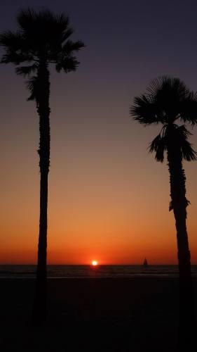 Palmier coucher de soleil Venice Beach Los Angeles