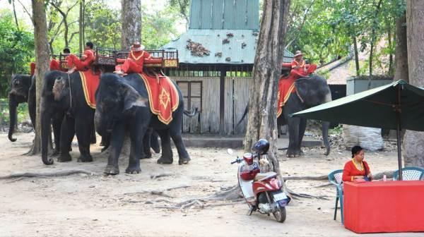elephants angkor