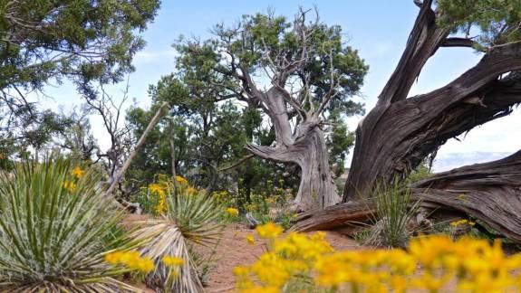 arbre USA