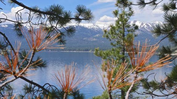 lac tahoe sapins