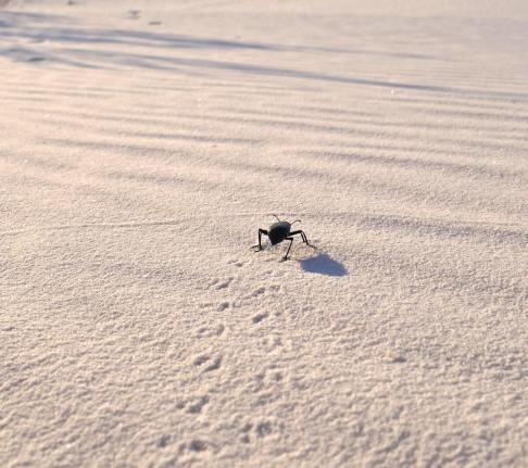 insecte sable white sands