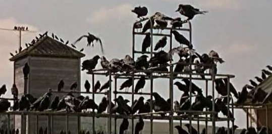 les-oiseaux-1963