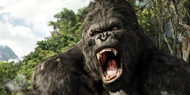 [Sortie Cinéma]  «King Kong»