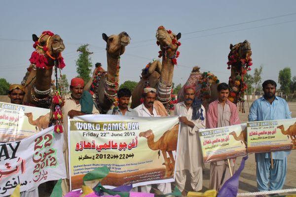 World Camel Day