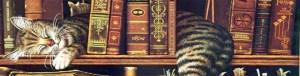 Buch_Katze_schmal