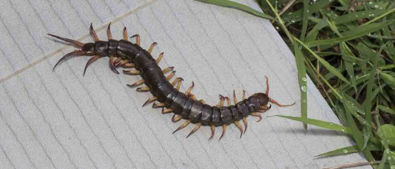 Large Of How To Get Rid Of Millipedes