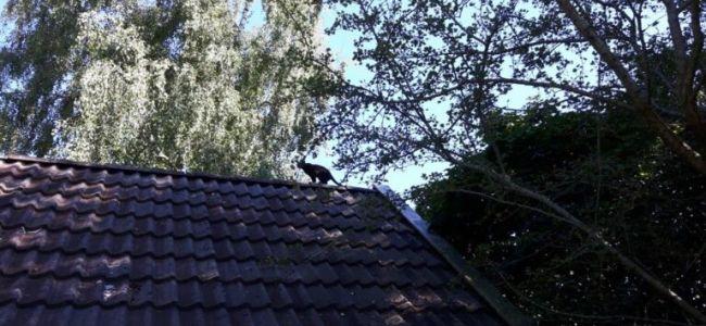 pientje-op-het-dak