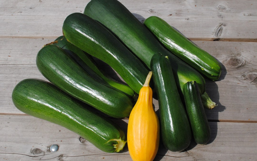 Too Much Zucchini?