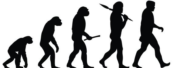 human evolved from ape