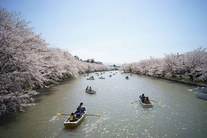 Japan's Cherry Blossom Festival - spring-japan-cherry-blossoms-national-geographics