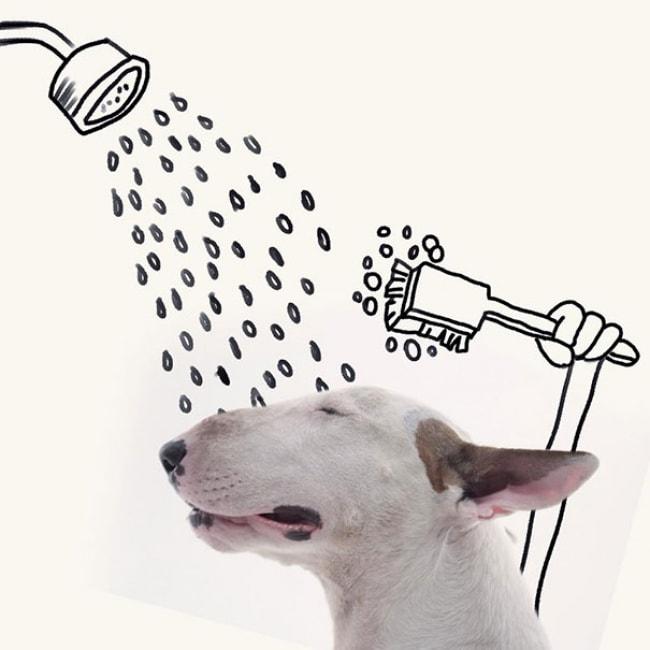 Jimmy Bull Terrier 5