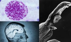 scientists-claim-mind-control-bug-affects-population