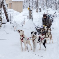 Dog sledding in Michigan's Upper Peninsula