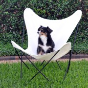 Butterfly Chair and Ritzy 2