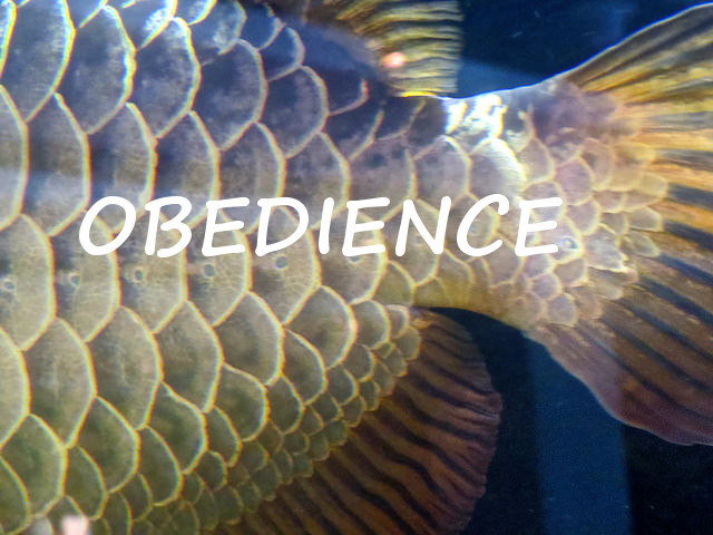 How the word 'obedience' stopped being a slap in the face with a wet fish