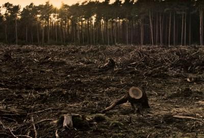public-domain-image-deforestation-59lbwb1nnsgop0pd