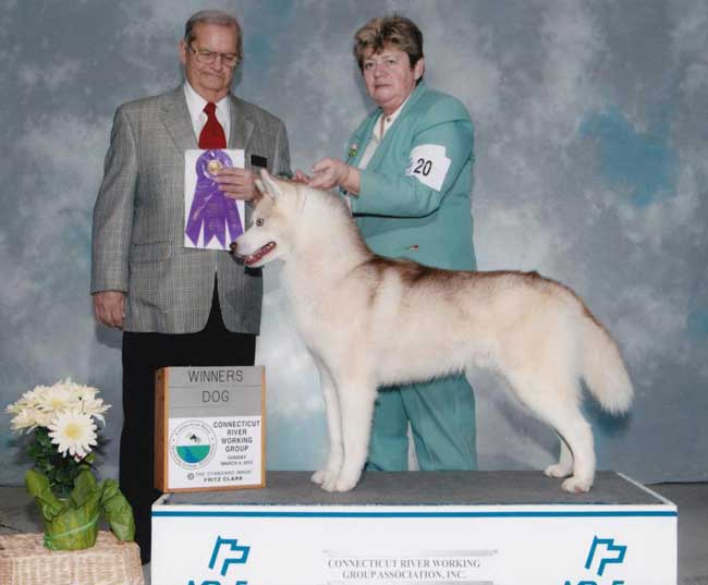 connecticut award - inner vision kennel dog