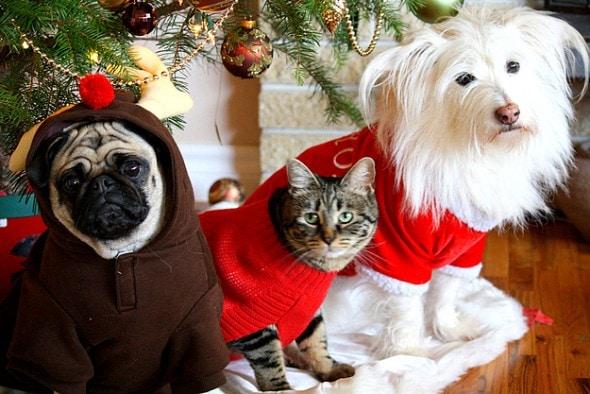 12.17.15 - Dog Ugly Christmas Sweater11