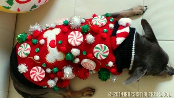 12.17.15 - Dog Ugly Christmas Sweater5