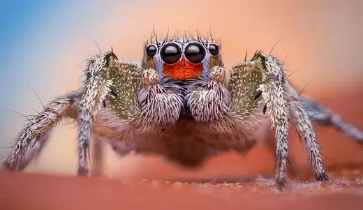Thomas Shahan & Macro Photography