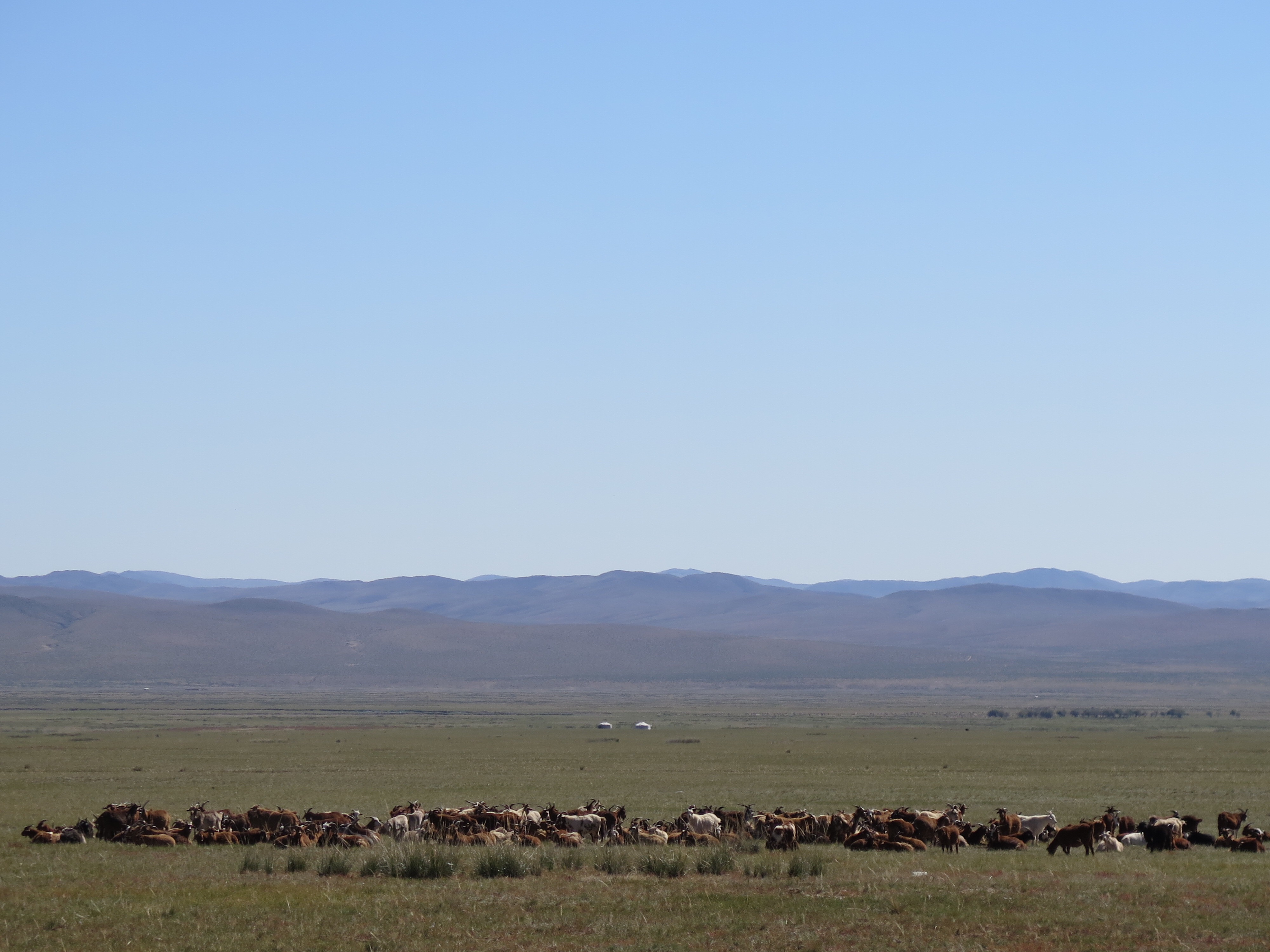 We thought this herd of goats was super cool. Really it was just the first of such herds we'd seen; they're everywhere. The only unusual thing about this one was that it was all goats, not a mix of goats and sheep.