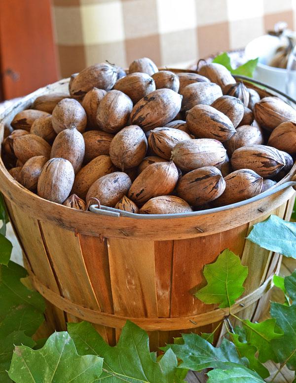 basket-of-pecans
