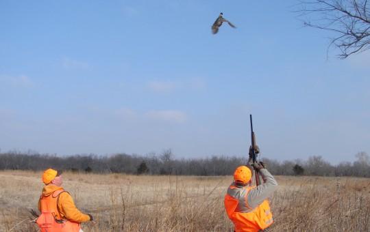 Kansas Upland Birds hunts