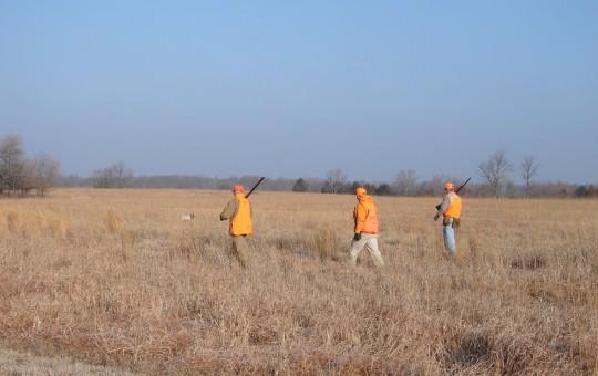 Upland Birds- Pheasant hunting Kansas (12)