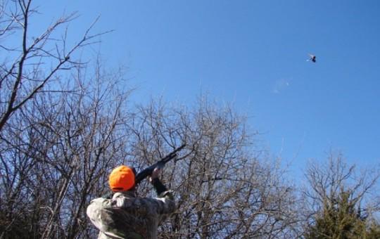 Upland Birds- Pheasant hunting Kansas (9)