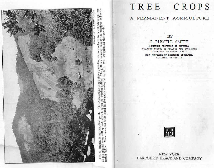 Tree Crops. A permanent agriculture