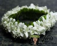 Orchid Haku - White
