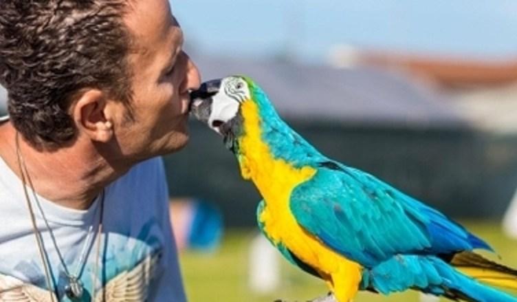 salvi e pappagallo