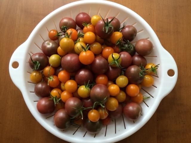 lovedove tomatoes