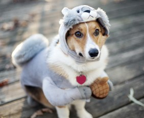Funny-Dog-Costumes