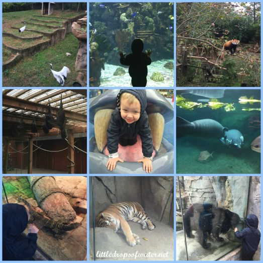 zoocollage1