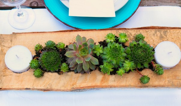 succulent final 1