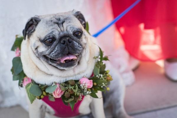 Wedding Dog | Little Vegas Wedding