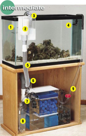 Aquarium Filter Set up: How to Hook Up a Wet/Dry Filter   Installing