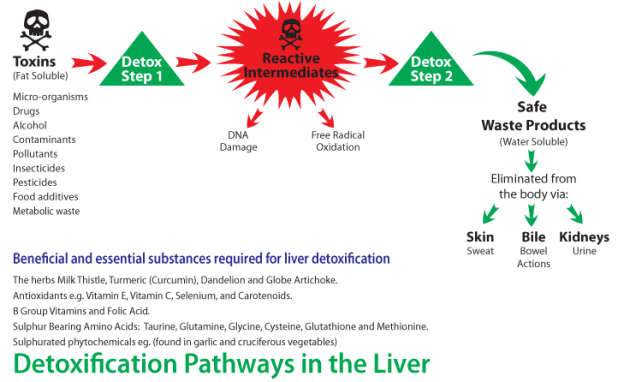 detoxification diagram