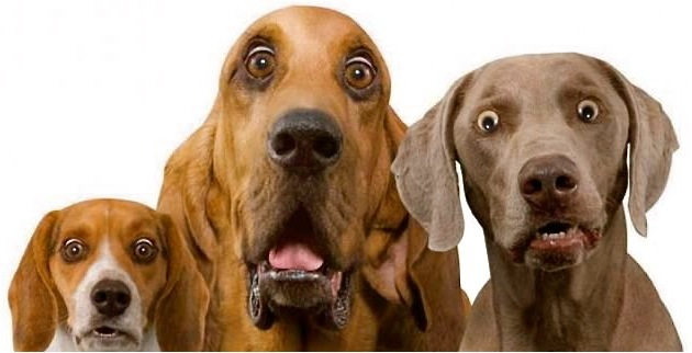 Shocked_look_Dogs