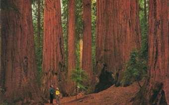 Viaggio Di Nozze #honeymoon #sequoia national Park