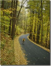 biker on road amid fall foliage