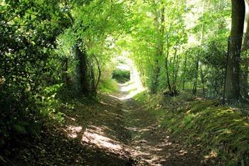 Epsom downs mountain bike route