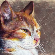 chat - crayon de couleur
