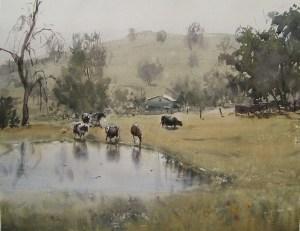 Cows at pond, web