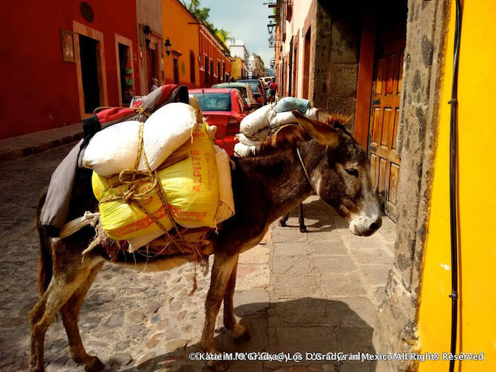 Burro Delivery