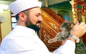 Melayê pisîkan
