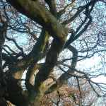 Twisted Branches, Kelvingrove Park