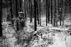 snow-storm-