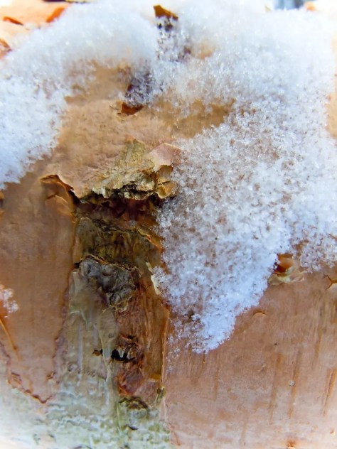 Ice and Wood